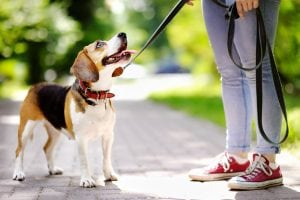 dog attack injury attorney